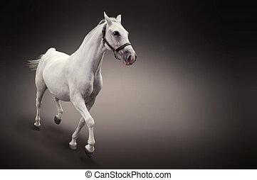 mouvement, cheval blanc, isolé