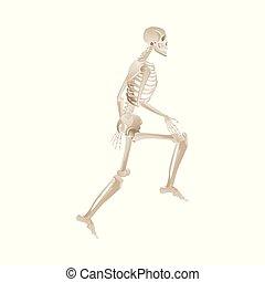 mouvement, courant, blanc, squelette