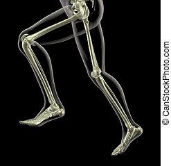 mouvement, courant, monde médical, squelette