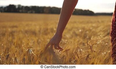 mouvement, femme, champ, arrière-plan., marche, croissant, femme, toucher, blé, crop., vue, orge, lent, oreilles, sur, en mouvement, doré, par, arrière, mûre, pré, main, lumière soleil, jeune
