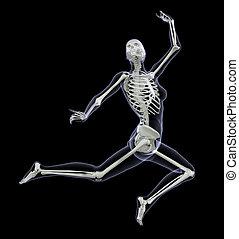 mouvement, femme, squelette, -, saut