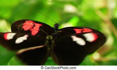 mouvement, gros plan, papillon, communication., lent, hd, -