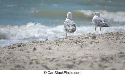 mouvement, lent, mouettes, seashore.