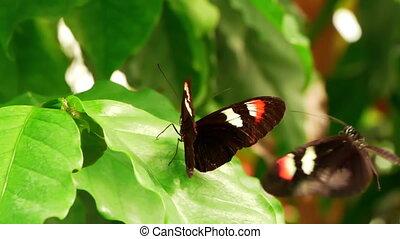 mouvement, papillon, communication., lent, hd, -