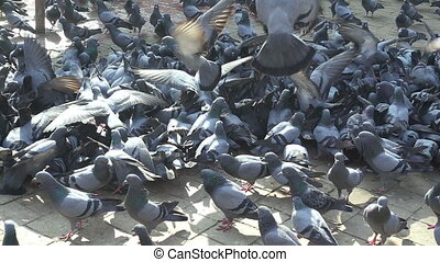 mouvement, pigeons, lent