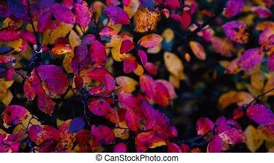 mouvement, sélectif, automne, mouvement, foyer, leaves., ...