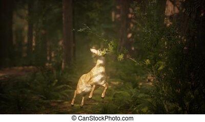 mouvement, saut, forêt pin, lent, extrême, cerf