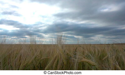 movement of clouds in the summer over wheat fields