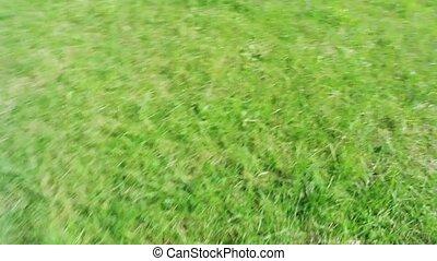 Movement of fresh green grass