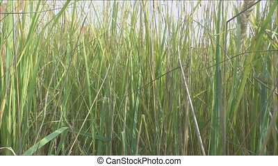 Movement of grass