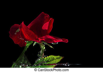 movimiento, rosas, mancha, rojo,  Valentine