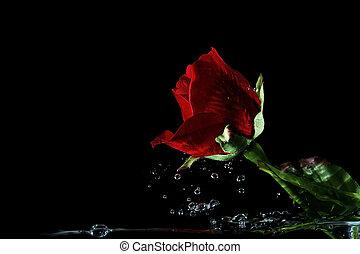movimiento, rosas,  Valentine, rojo, mancha