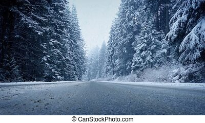 Moving Across Forest Road In Snowfall