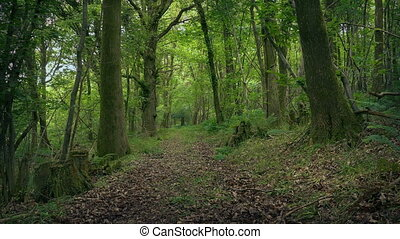 Moving Across Pretty Woodland Path - Moving slowly on path...