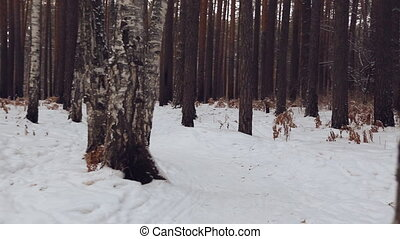 Moving along path in the winter forest