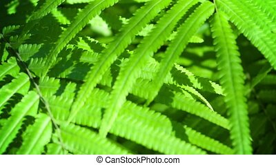 Moving Away from Wild Sunlit Ferns - Video 1080p - Slowly...