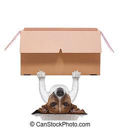 moving box  dog - dog lifting a very big moving box