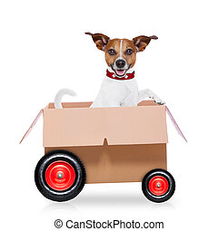 moving box dog - mail delivery jack russell dog in a big...