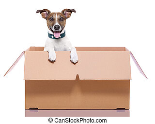 mail dog in a moving very big moving box
