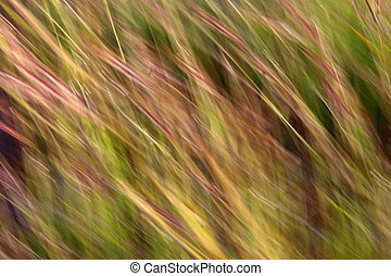 moving brown grass