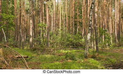 Moving camera in the summer forest with tree trunk