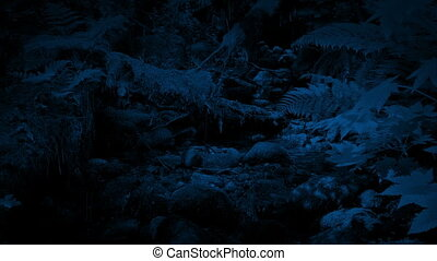 Moving Down To A Woodland Stream At Night - Slowly moving...