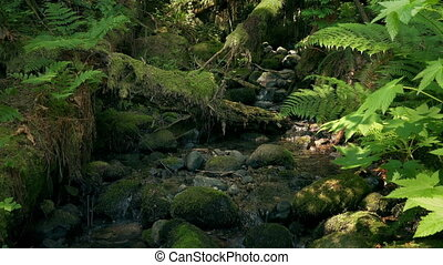Moving Down To A Woodland Stream - Slowly moving down a...
