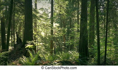 Moving Down To Ground In Lush Summer Forest - Jib shot...