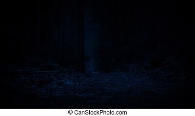 Moving On Path Through The Forest At Night