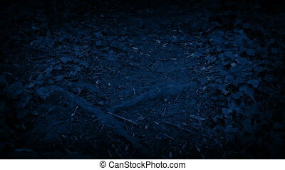 Moving Over Forest Path At Night - Moving along rugged...