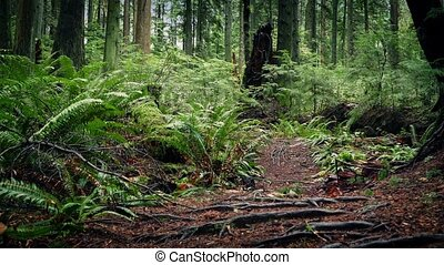 Moving Over Trail In Beautiful Woodland - Dolly shot moving...