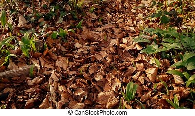 Moving Over Woodland Path Covered In Fall Leaves