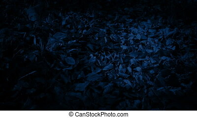 Moving Over Woodland Path In The Dark - Moving along a leafy...
