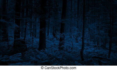 Moving Over Woodland Plants At Night - Slowly moving over...