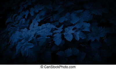 Moving Over Woodland Plants In The Dark