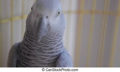 Parrot in a cage in home close up