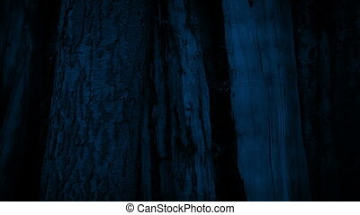 Moving Past Big Tree Trunk At Night - Moving around a large...