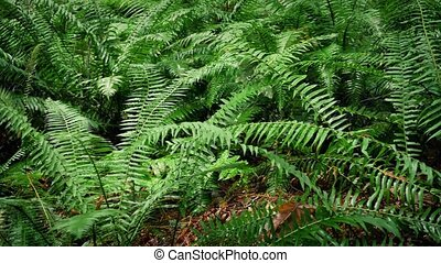 Moving Past Dense Forest Ferns - Dolly shot moving slowly...