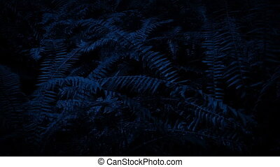 Moving Past Ferns In The Dark - Dolly shot moving past ferns...