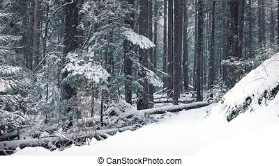 Moving Past Forest Path In Snowfall