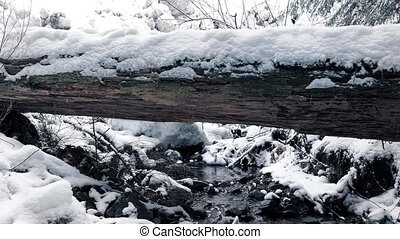 Moving Past Snowy Log Over Stream