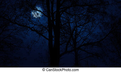 Moving Slowly Past Trees With Moon Above - Tracking shot...