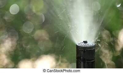 Moving sprinkler watering garden - Automatic sprinkler ...