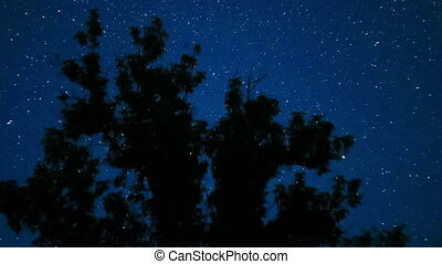 Moving Stars in Night Sky over Trees. Time Lapse.