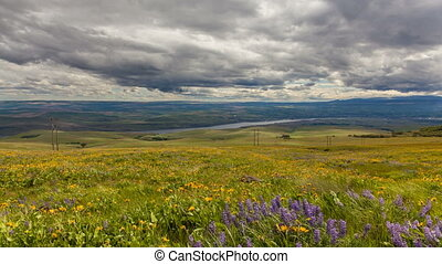 Moving Sun and Dark Clouds 1080p - Lupine and Balsamroot...