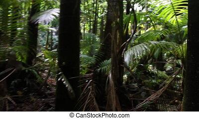 Moving Through Jungle