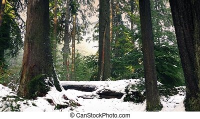Moving Through Pretty Winter Forest In Snow