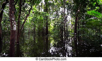 Moving through the Jungle - Moving though the Amazon rain...