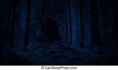 Moving Through Woods At Night