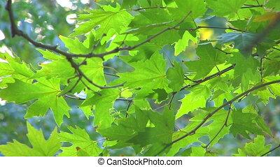 Moving tree branch